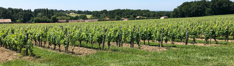 Lotte weet Wijn op bezoek in wijngaard
