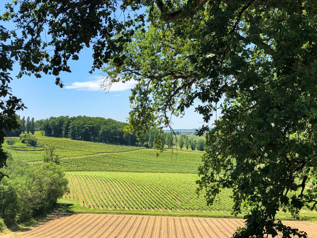 Wijn uit Bergerac