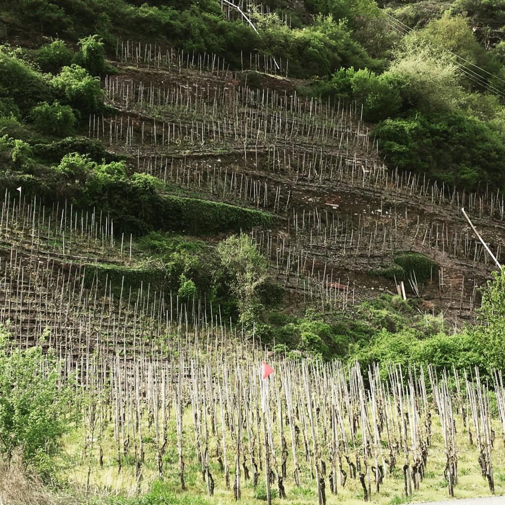 Wijngebied Moesel